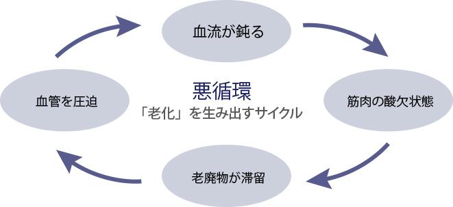 「老化」を生み出すサイクル